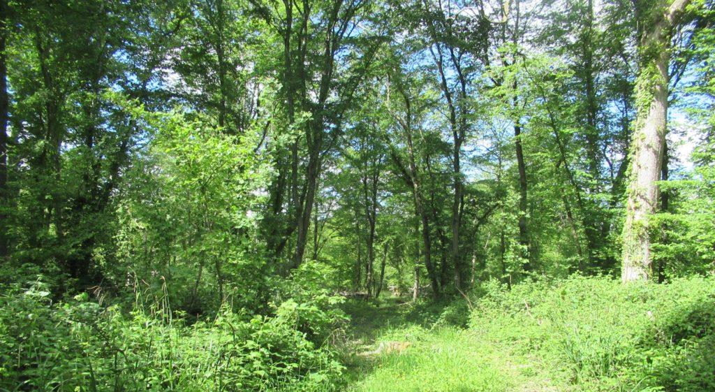 Au détour d'un chemin se dévoile un recoin verdoyant de la forêt de Boulogne. La végétation est lumineuse de soleil. Les arbres s'élancent vers un ciel éclatant. A  leurs racines, les ronces forment des buissons denses. Le lierre escalade les troncs fins.