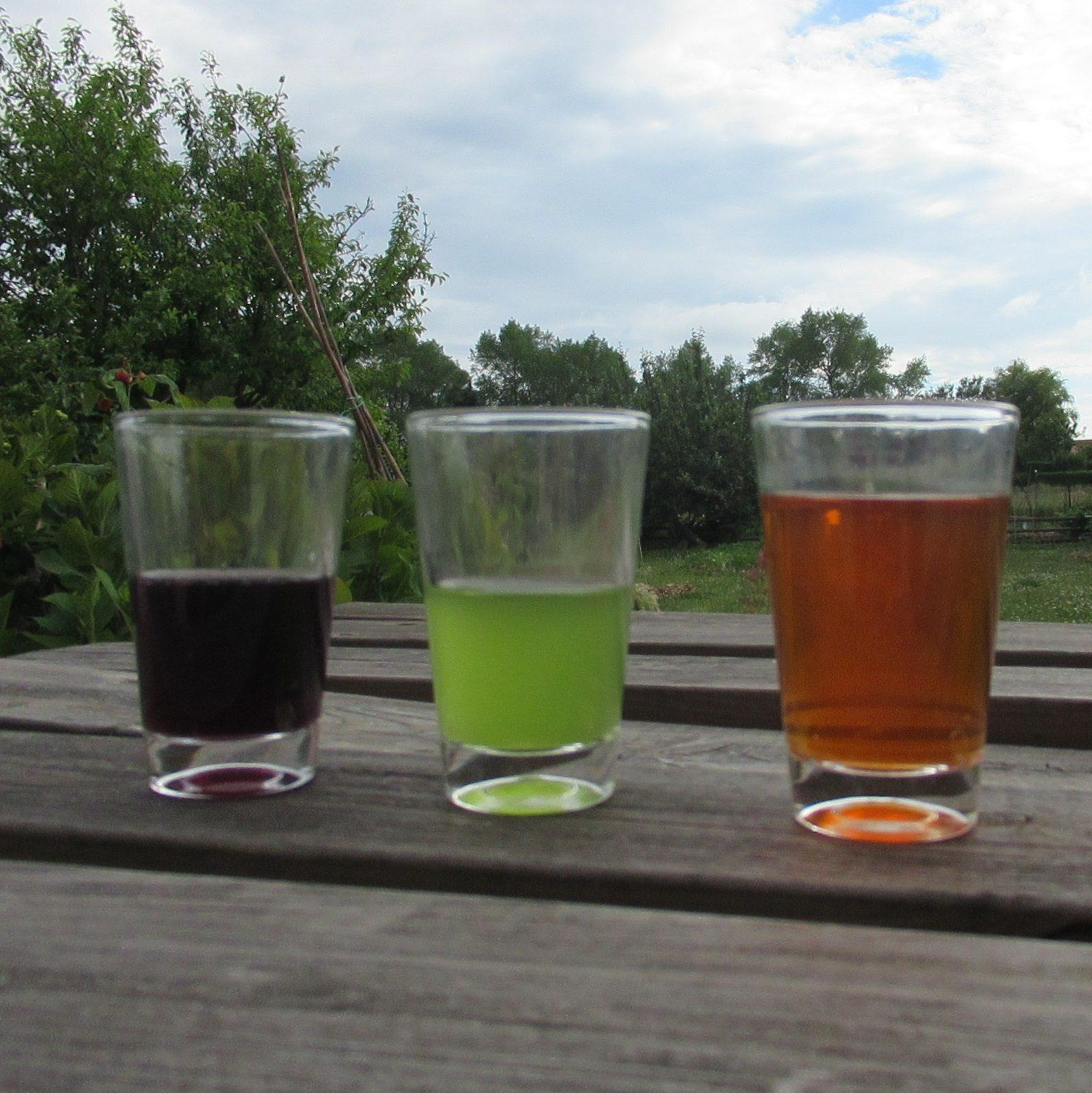 Trois verres contiennent respectivement des liquides violet, vert et orange. Ces encres végétales ont été fabriquées à partir de plantes, mais lesquelles ?